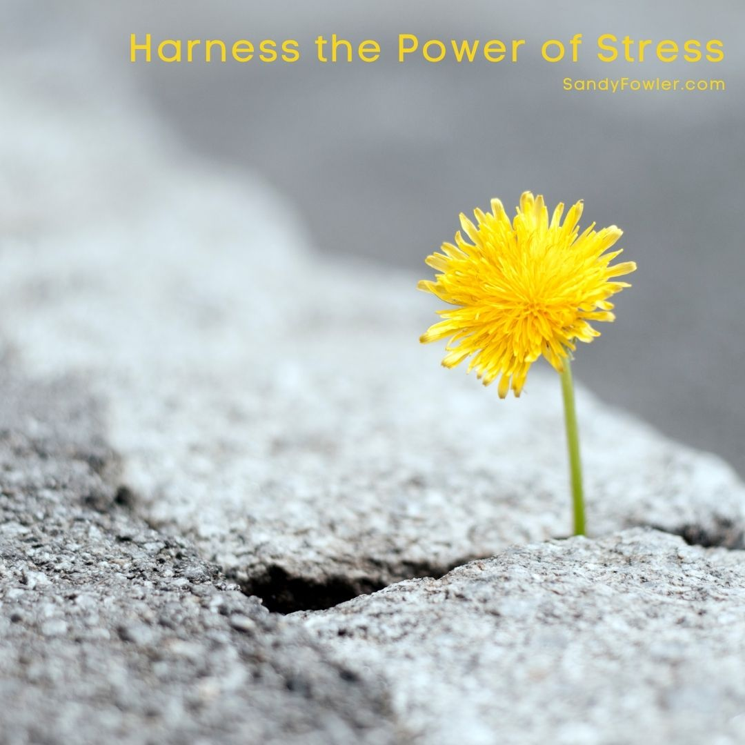 Harness the Power of Stress